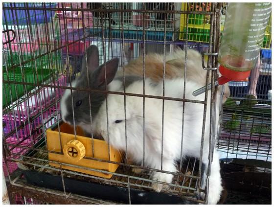 Punir lapin nain le lapin domestique - Enclos lapin pas cher ...